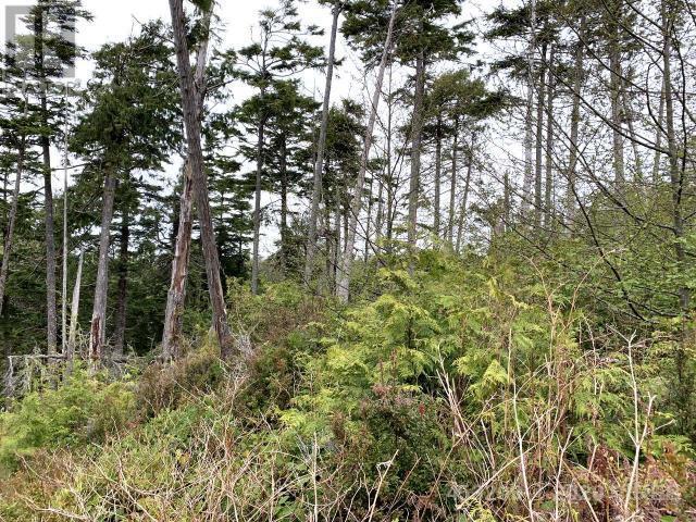 854 Marine Drive, Ucluelet, British Columbia  V0R 3A0 - Photo 9 - 453209